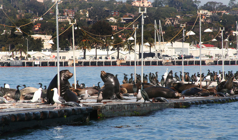 Sea Life in San Diego Bay
