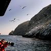 Eco-tour of Coronado Islands, Adventure Rib Rides San Diego