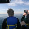 Whale Fluke from Adventure Rib Rides San Diego