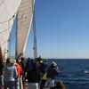 Whale Fluke from bridge of The America Yacht