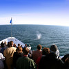 Whale Spout from Deck of Hornblower Whalewatch Cruise