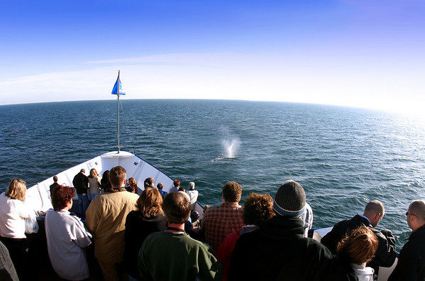 Whalewatching & Eco-Tourism Experiences