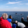 Whale Flukes from Adventure Rib Rides in San Diego