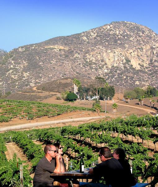 Orfila Winery View on Vinyard