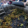 Filling the Grape Stomp Barrel