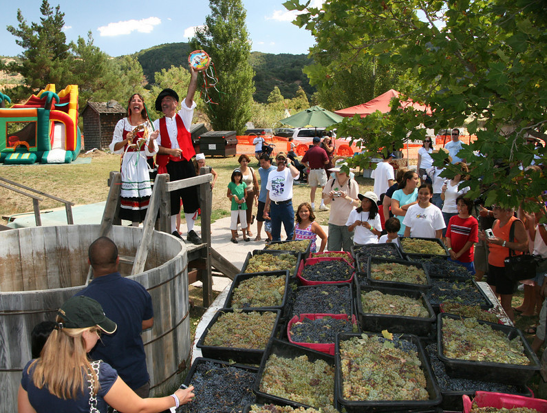 Grape Stomp at Menghini Winery in Julian