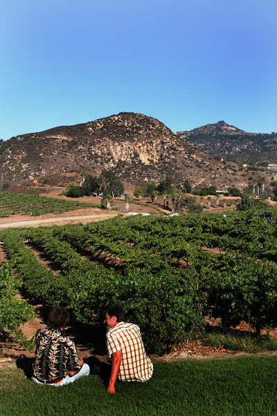 Orfila Winery Escondido