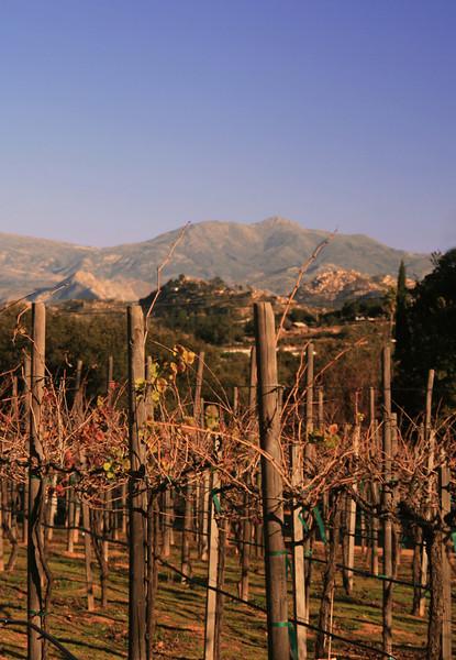 Vineyard in Winter, Ramona, East County