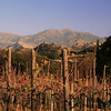 Vineyard in Winter, Ramona, East County