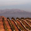Wineries, Vineyards, Grape Stomps near San Diego :