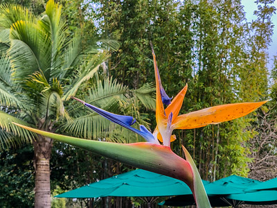 Bird of Paradise at the San Diego Zoo