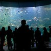 Aquarium (4),<br>California Academy of Sciences