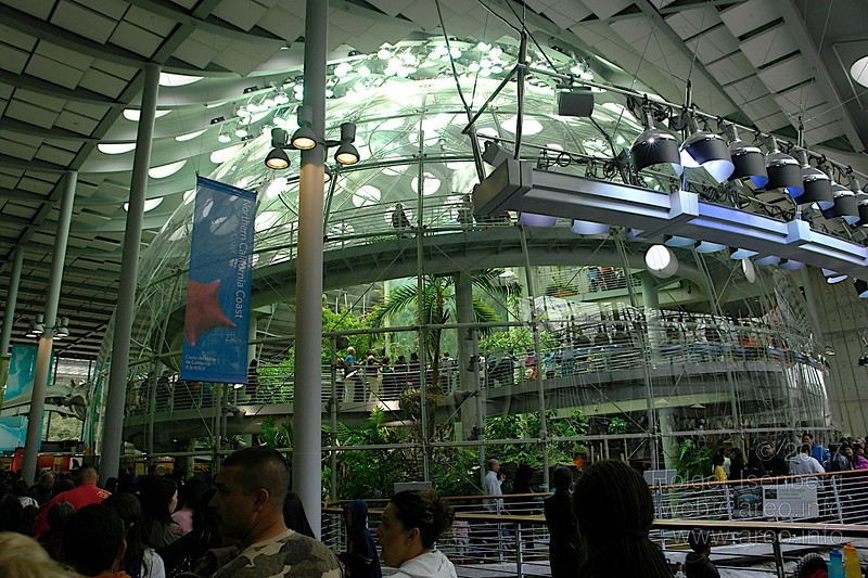 Regenwald,<br>California Academy of Sciences