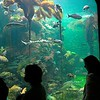 Aquarium (2),<br>California Academy of Sciences