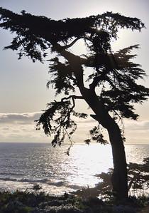 ocean-tree