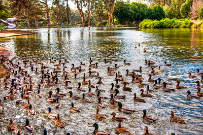 ducks-pond-park