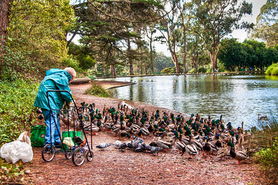 man-feeding-ducks-2