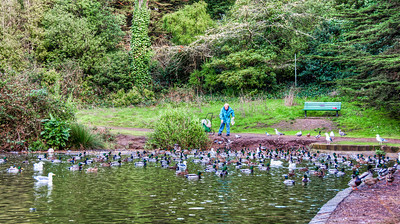 man-feeding-ducks