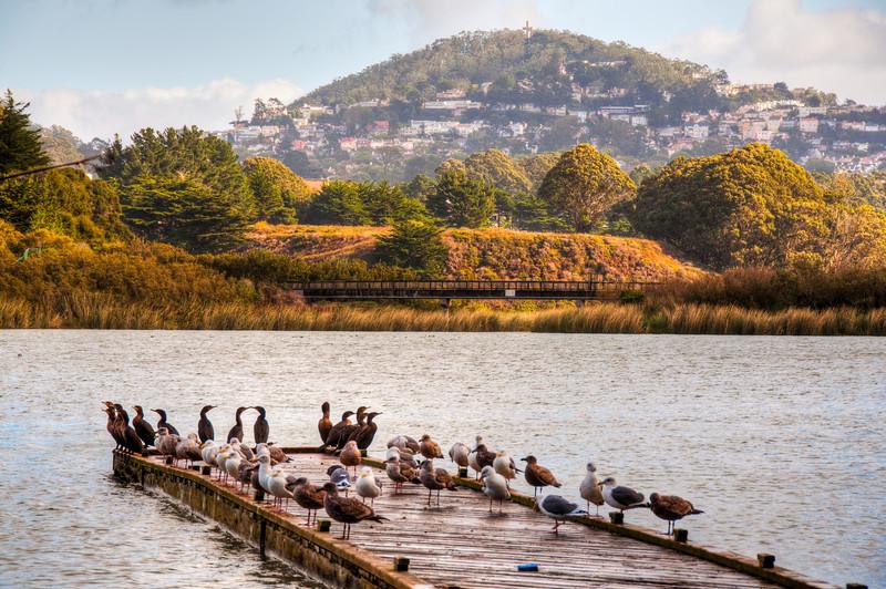ducks-dock-lake-4