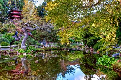 garden-pond-reflection