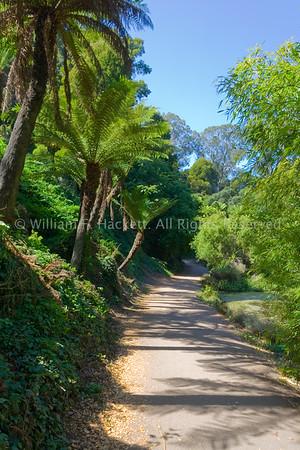 Lily Pond Trail3911