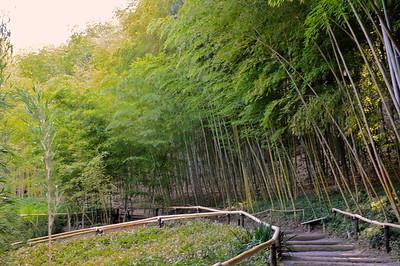 Hakone Gardens 005