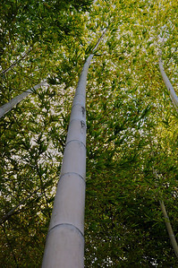 Hakone Gardens 007