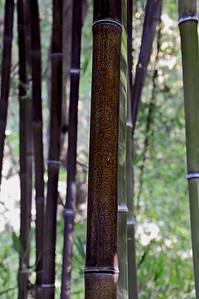 Hakone Gardens 038