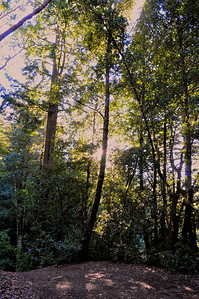 Tofani Trail-060