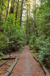 El Corte de Madera Creek Trail-025