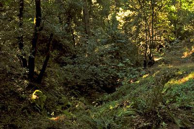 El Corte de Madera Creek Trail-002