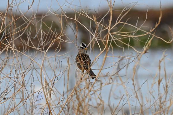 Stevens Creek/Shoreline Open Reserve