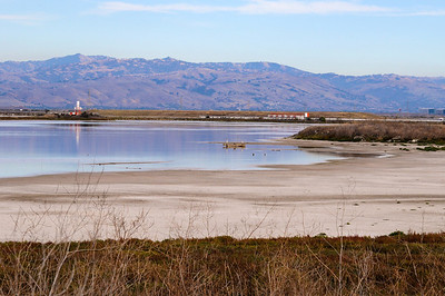 A walk through  a South Bay Slough
