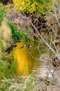 Los Alamitos Trail-053
