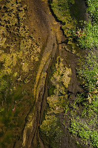 Canoas Creek 07.03.12-3