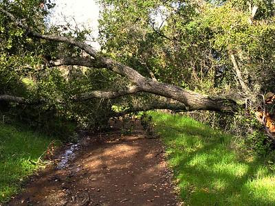 Randol Trail 020915 - 027-2