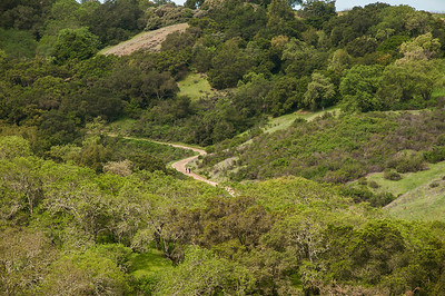 New Almaden Trail-0040