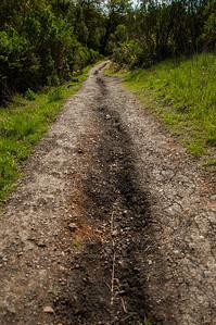 New Almaden Trail-0036