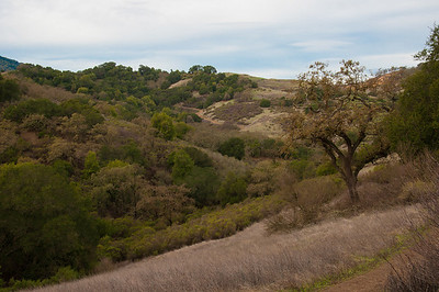 New Almaden Trail-0008