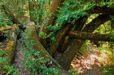 Franciscan Loop Trail-016