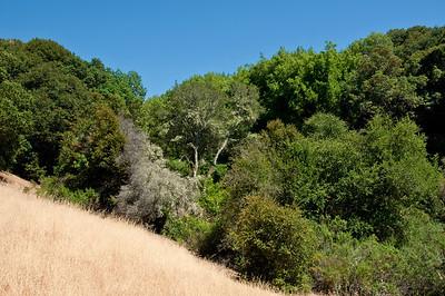 Franciscan Loop Trail-013