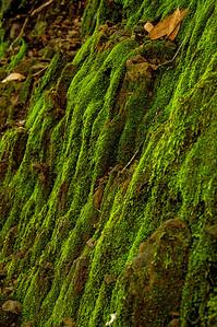 Aquinas Trail-051