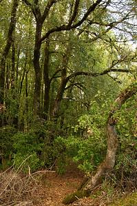 Aquinas Trail-045