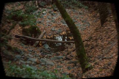 Woods Trail 100713-0022