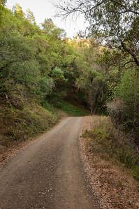 Woods Trail 100713-0013