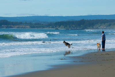 This scene reminded me of the last two dogs I had many years ago. One, a shepard, loved the water. The other stayed clear of the water and just ran around on the shore waiting for the other's return just like in this photo.