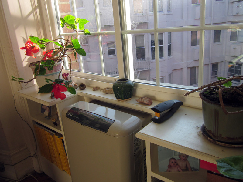 Window sill in my bedroom at 735 Geary