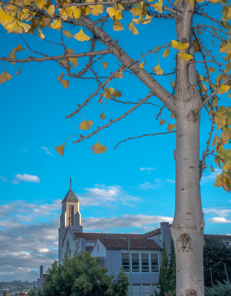 Church, Clouds, and Gingko Tree with Yellow Leaves