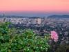 Pink Rose, Downtown Oakland, Bay Bridge, Golden Gate Bridge, and San Francisco