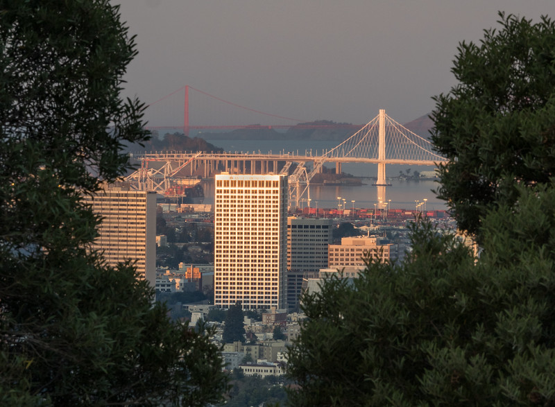 Downtown Oakland and Bridges Framed by Trees